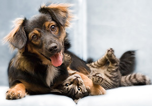 Dog and cat protection