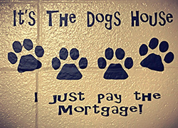 The Dogs House at Animal Inns Dog Boarding